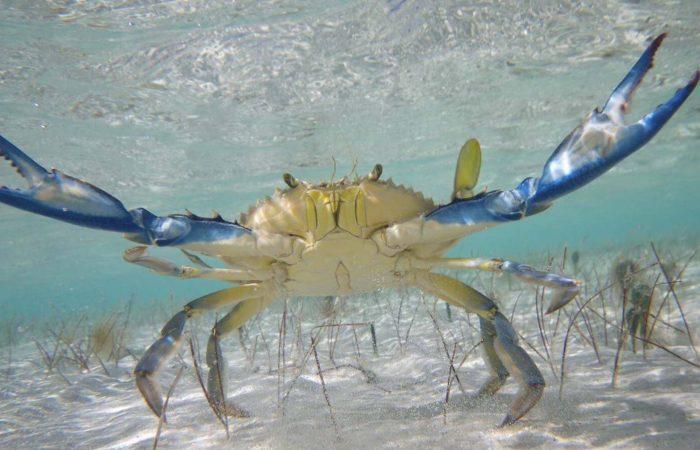 crabe Isla Contoy