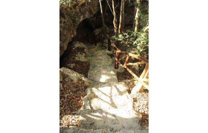 cenote tortues tulum