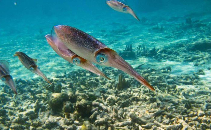 snorkeling à akumal