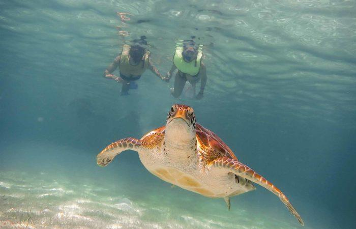 nager avec les tortues akumal