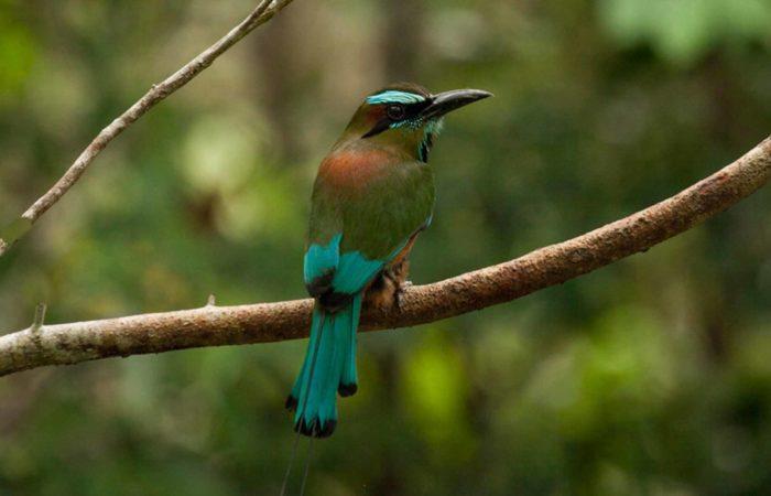 faune riviera maya