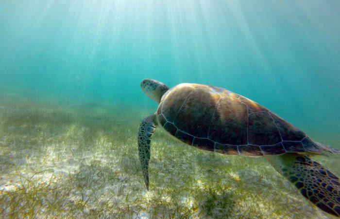 excursions pour voir les tortues akumal