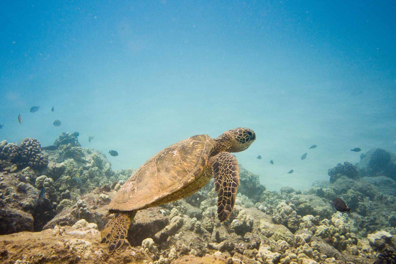 excursion tortues playa del carmen