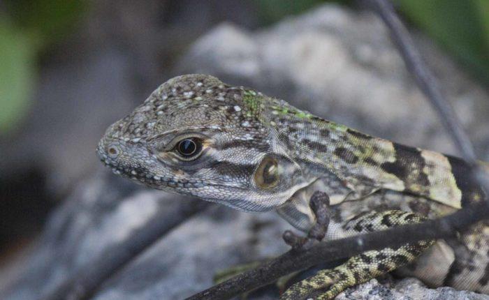 cenote tortues playa del carmen