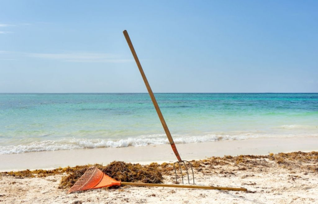 sargasses playa del carmen