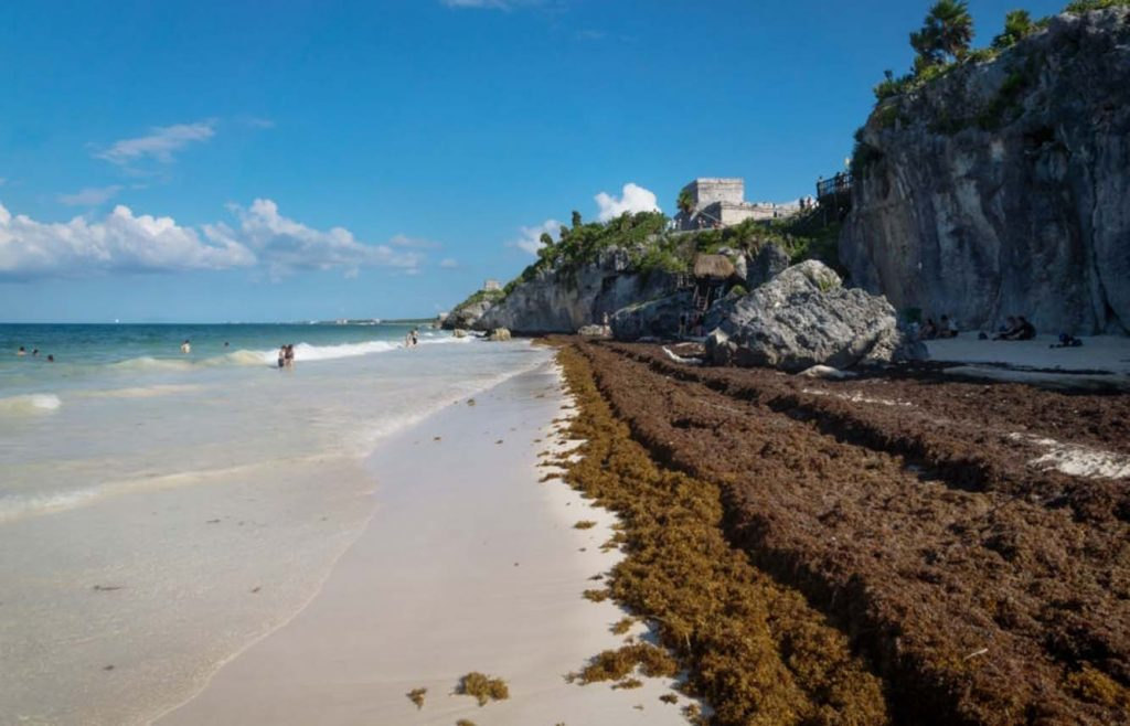 algues sargasses riviera maya